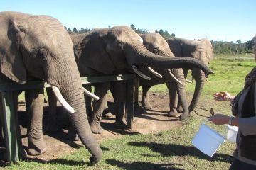 Knysna Elephant Sanctuary