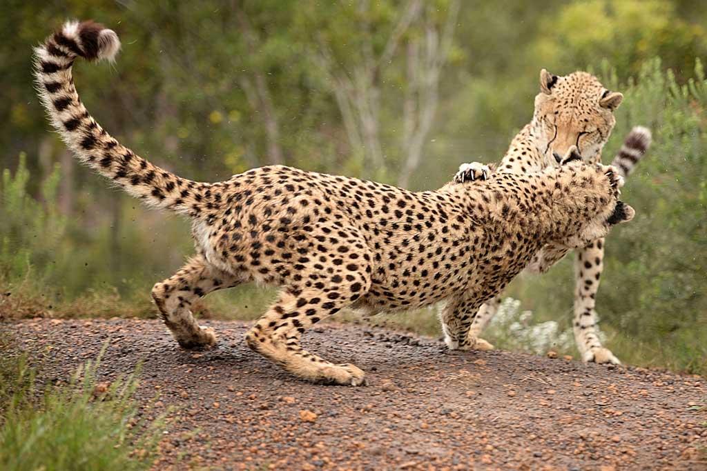 Its wild at Tenikwa