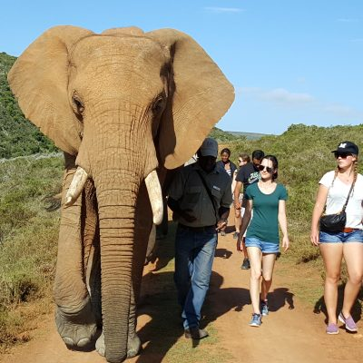 Indalu Game Reserve - For Safari Game Drive and Elephant experience